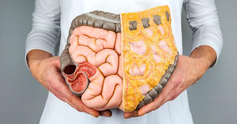 13 Dicas Naturais Para Melhorar a Saúde Digestiva