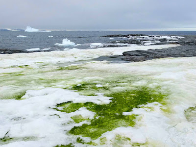green snow Antarctica