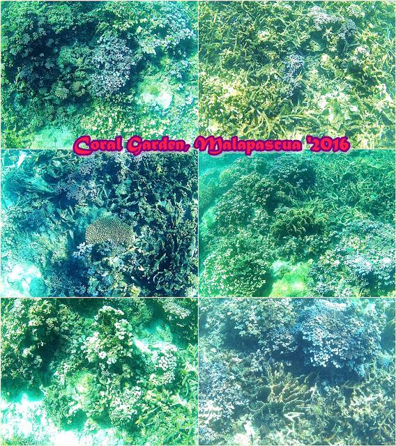 Blue Corals Resort, Malapascua Island