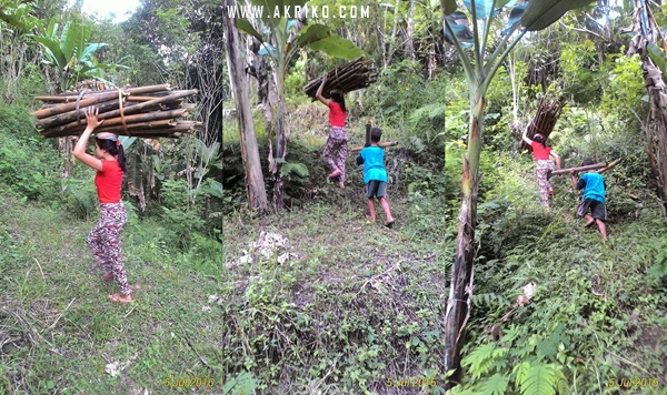 Wanita Cantik Mencari bambu