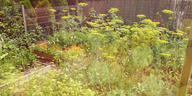 lato warzywnik