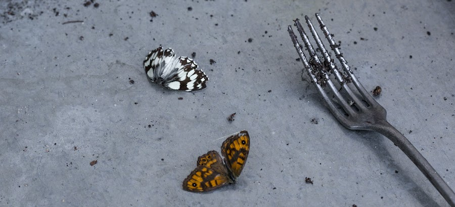 Greenhouse casualties