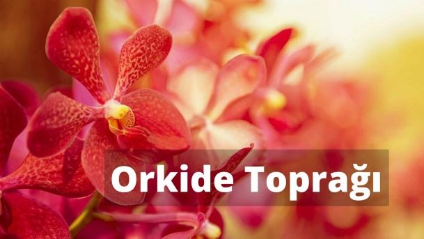 Orkide Toprağı