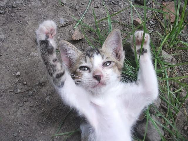Kisah Wanita Masuk Neraka Karena Seekor Kucing Yang Membuat Sedih Setelah Membacanya