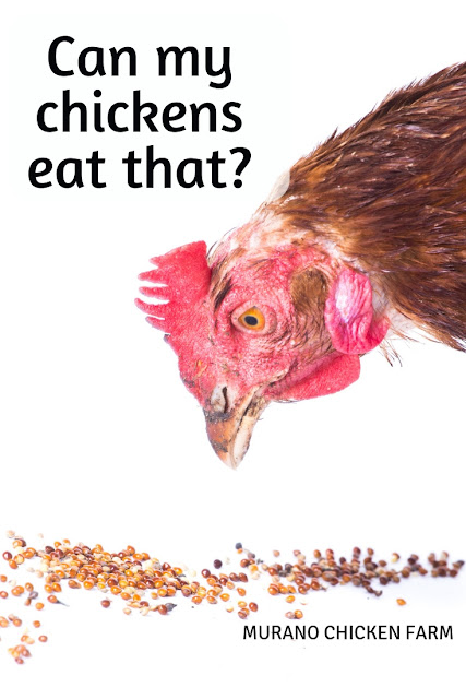 Can my chickens eat that?