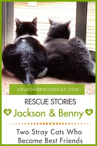 Cat Rescue Stories