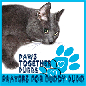 Purrs for Buddy