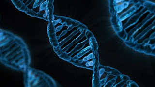 Imagen que representa dos cadenas de ADN