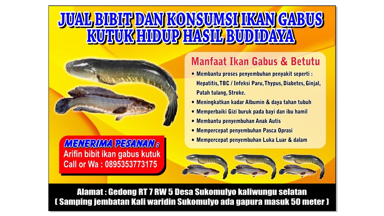 Cara Memasak Ikan Gabus Sebagai Obat Penyembuh Setelah Operasi Griya Arka Kendal