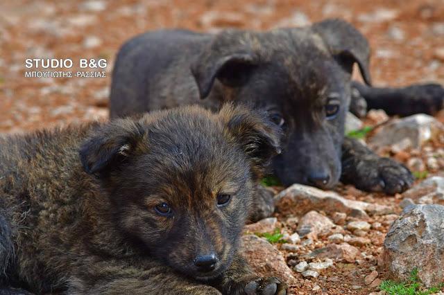 Τι αλλάζει για τα ζώα συντροφιάς -Τέλος οι γέννες, βαριά πρόστιμα, κυρώσεις για δήμους και μητρώο ζώων