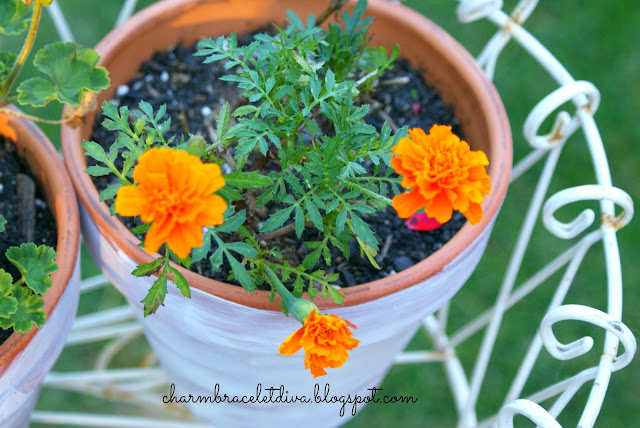 marigolds in faux weathered aged terra cotta clay pot