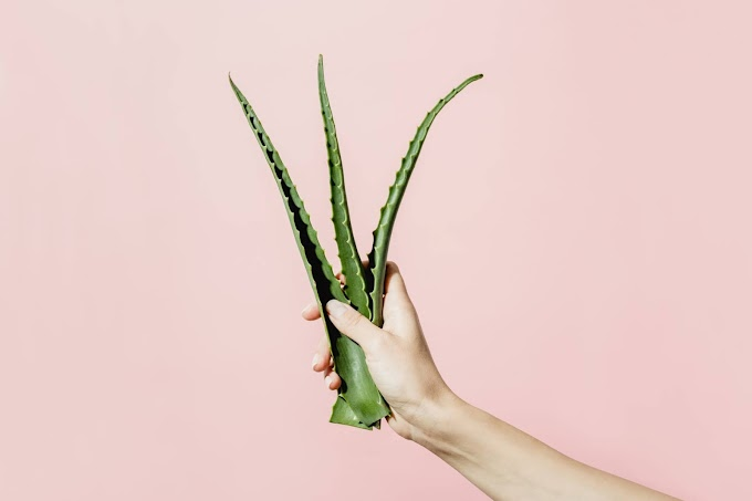 9 Benefits Of Using Aloe Vera For Skin Care & More