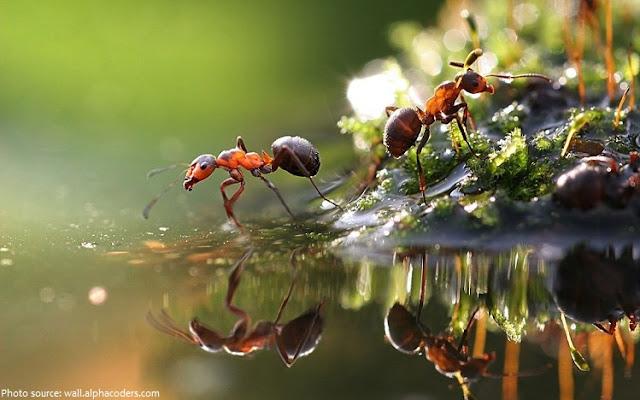 Semut ialah binatang kecil yang dikala menggigit biasanya akan menyebabkan gatal Tips Mengusir Semut dari Kandang Penangkaran Hewan