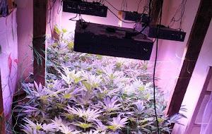 Συνελήφθη 38χρονος για υδροπονική καλλιέργεια κάνναβης και κατοχή ναρκωτικών ουσιών σε περιοχή του Κιλκίς (φωτο)