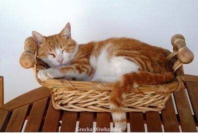 rudo-biały kot spi w koszy wiklinowym