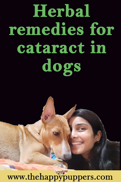 Herbal remedies for cataract in dogs