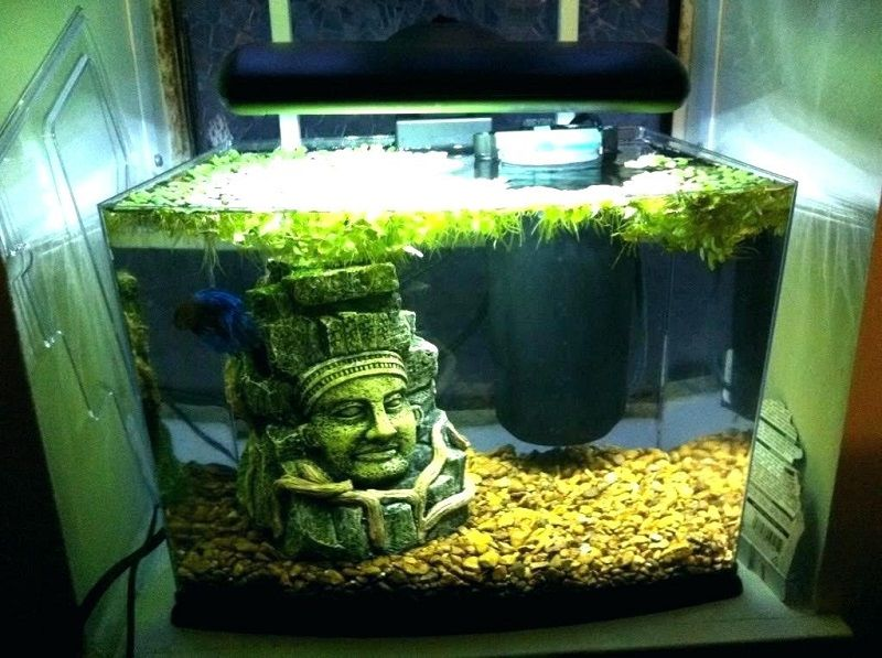 Image Betta Tank with Filter