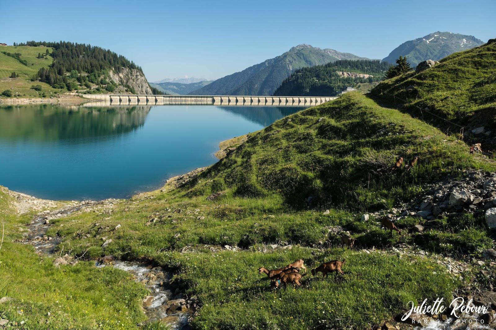 Alpage de chèvre au lac de Roselend