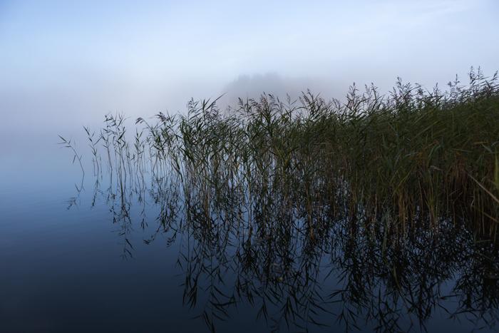 Järviruoho