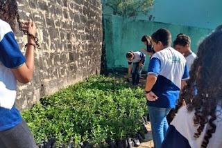 ONG distribui 150 mil mudas para reflorestar mais de 20 cidades