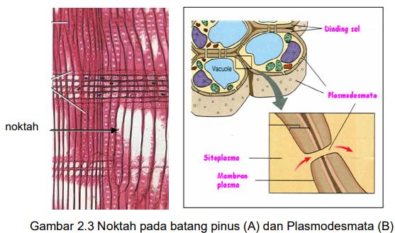 Struktur dan fungsi organel sel