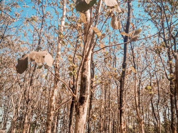 Cerita Dari Hutan yang Lebih Dari Sekedar Pohon