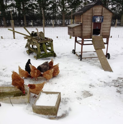 HenSafe Smallholding. The Beast From the East.