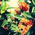 1001 Manfaat Bunga Asoka Untuk Kecantikan Dan Kesehatan