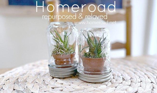 Recycled jar succulent terrarium