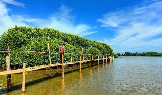 hutan mangrove congot kulon progo yogyakarta, alamat hutan mangrove kulon progo, lokasi hutan mangrove kulon progo, rute hutan mangrove kulon progo, harga tiket masuk hutan mangrove kulon progo 2020, tiket masuk hutan mangrove kulon progo 2020, hutan mangrove kulon progo tiket masuk 2020
