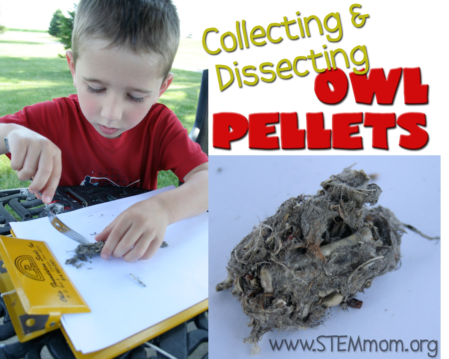 Dr Stem Mom Collecting Amp Dissecting Owl Vomit Pellets