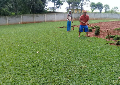 Jual rumput di gading serpong | tukang rumput gading serpong | tukang rumput bogor