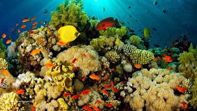 Kekayaan Alam Taman Nasional Bunaken