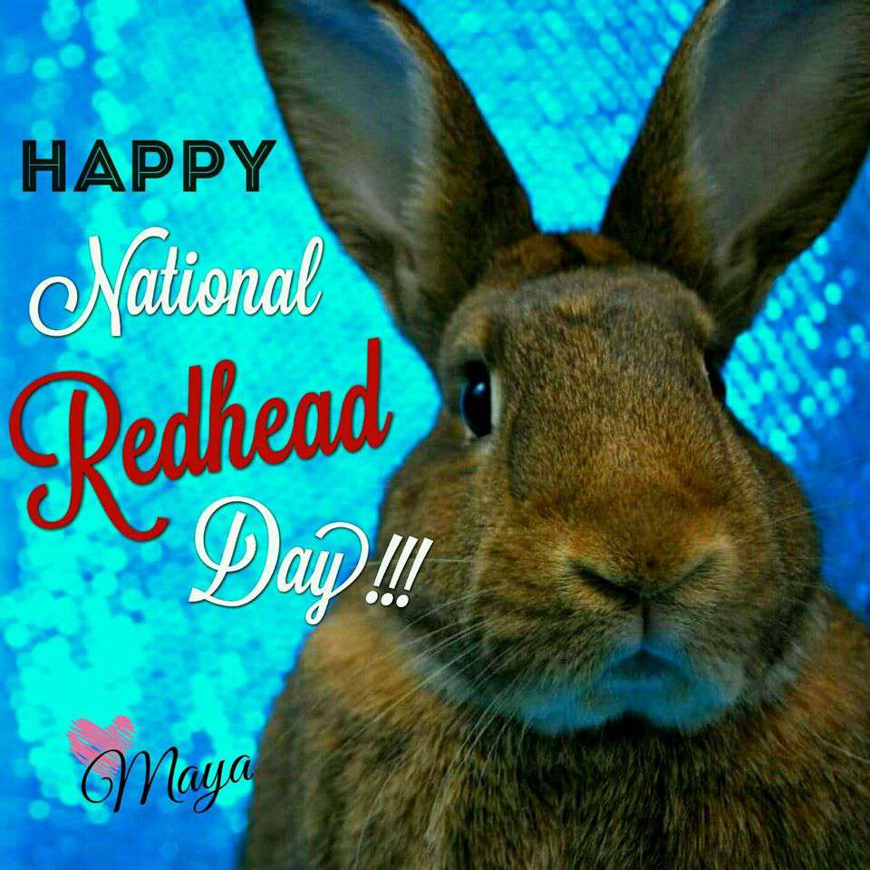 National Redhead Day Wishes Photos