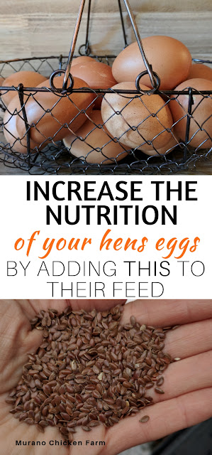 Adding flax seeds to hens diet