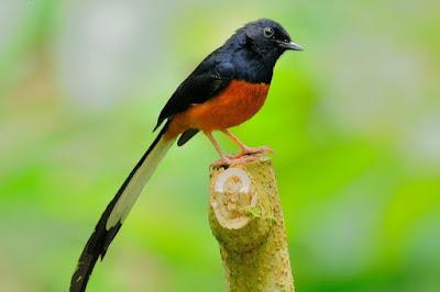 Kisaran Harga Terbaru Dan Manpaat Pemberian Ebod Solution Untuk Mengatasi Masalah Pada Burung Kicau