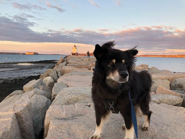 dog on stone pathway to lighthouse
