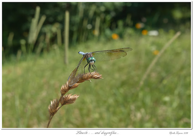 Lincoln: ... and dragonflies...