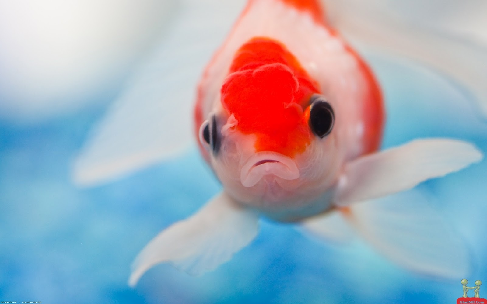 Cute Wallpapers For Mobile: Hd Wallpapers Of Cute Fishes
