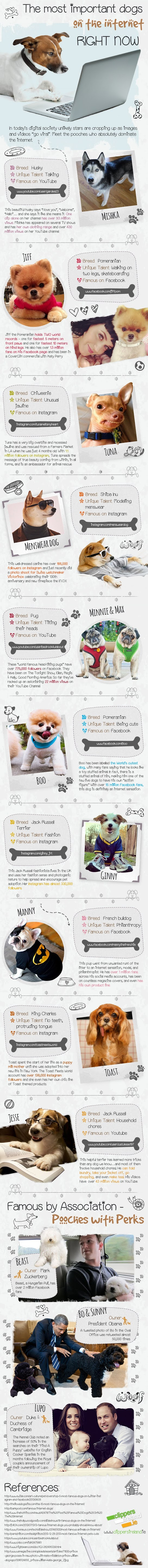The most important dogs on the internet right now #infographic #Dogs #Internet