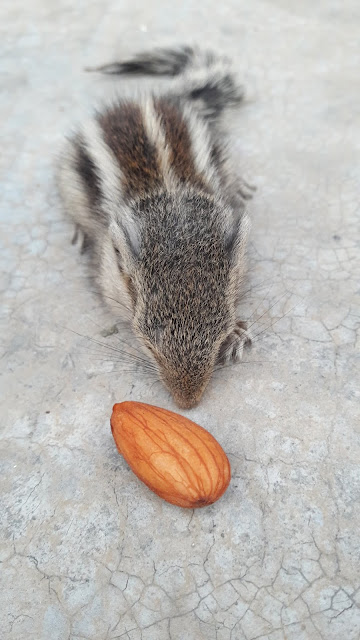 squirrel,muzaffarnagar