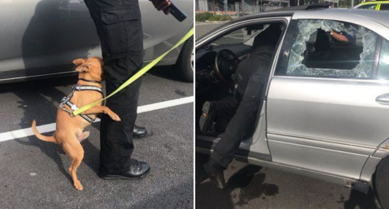 Family's unbelievable response after dog saved from hot car during heatwave