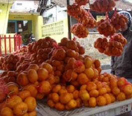 bibit jeruk santang | jeruk santang madu unggul | budidaya jeruk santang madu | manfaat jeruk santang madu | jeruk santang madu berkualitas