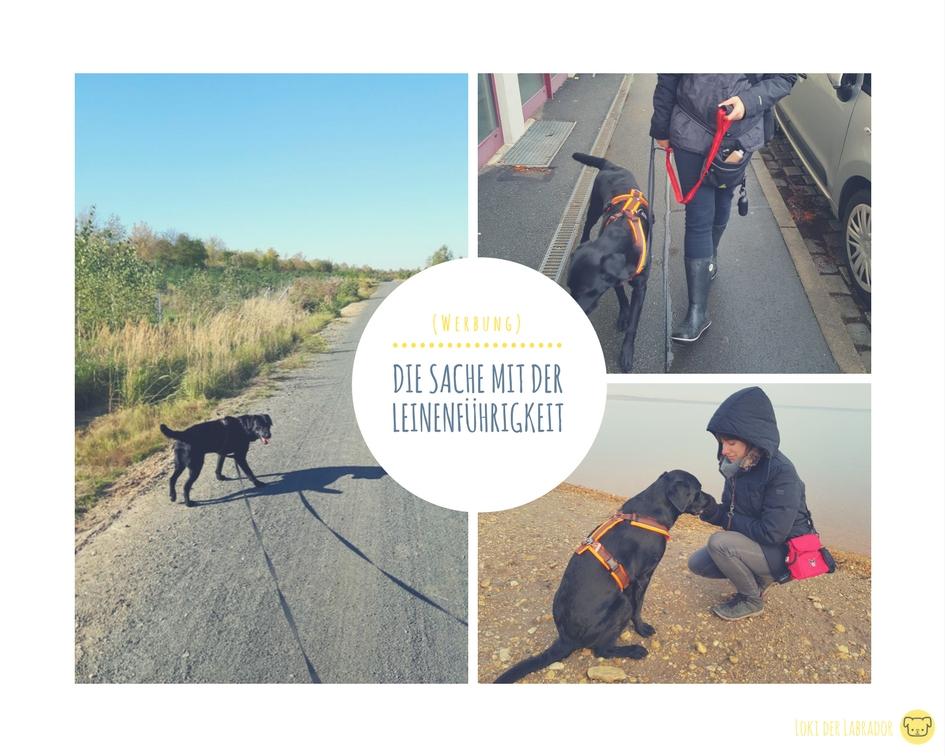 Fotocollage Leinenführigkeit Labrador Hundeleine