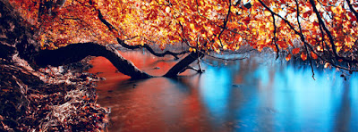 colored contrast autumn tree dry leaves river facebook cover - كفرات وأغلفة فيس بوك 2018