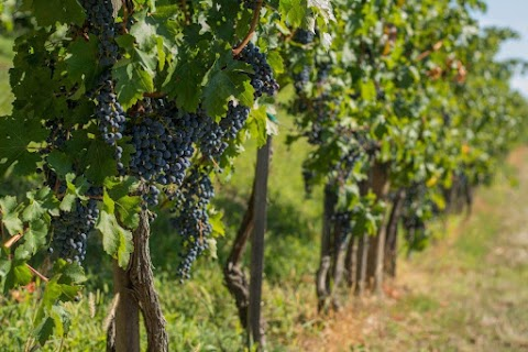 Hatalmas segítséget kapnak a szőlőtermelők