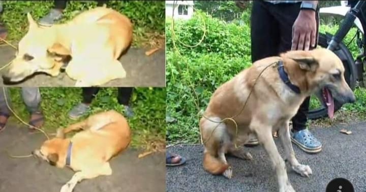 Dog was tied to the car and dragged on the road