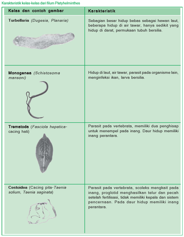 platyhelminthes kelas monogenea