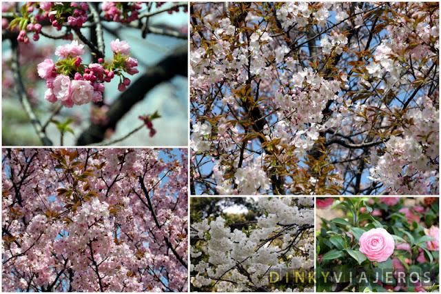 Flores del Hama-rikyu Gardens