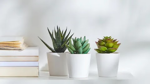Ideas For Decorating Your House With Artificial Plants and Flowers